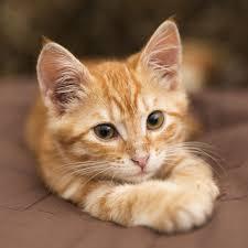 Drontal pour chat